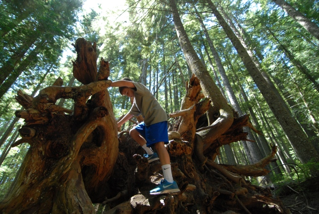 There were also many moments that could never be duplicated in Italy.  Ray climbed trees on a hike at Longmire.